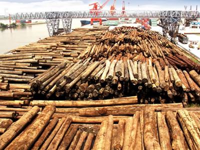 中国木材市场出现严重供过于求