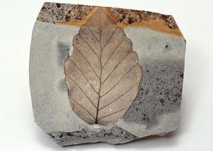雨花石手链价格_植物化石_植物化石价格_植物化石图片-金投收藏网-金投网