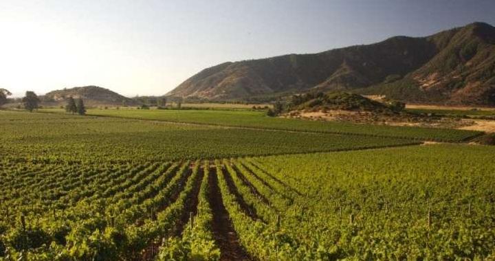 干露酒庄:智利最大 最古老的葡萄酒酒庄