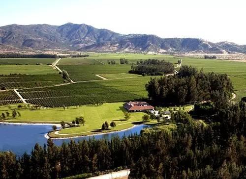 拉菲(Lafite) 世界顶级的葡萄名酒