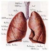 肺部肿瘤的症状和治疗方法是什么