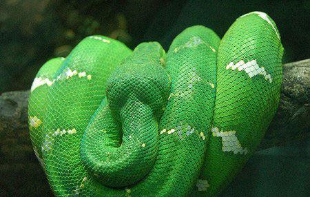 10大世界上最美的蛇 最后一个是要化龙吗?