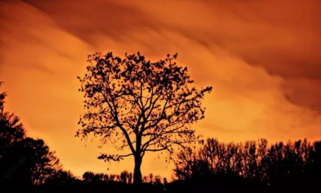"""日落而息的不止人类,研究发现树也会""""睡觉"""""""