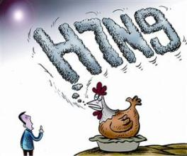 北京首例禽流感患者确认受家禽感染