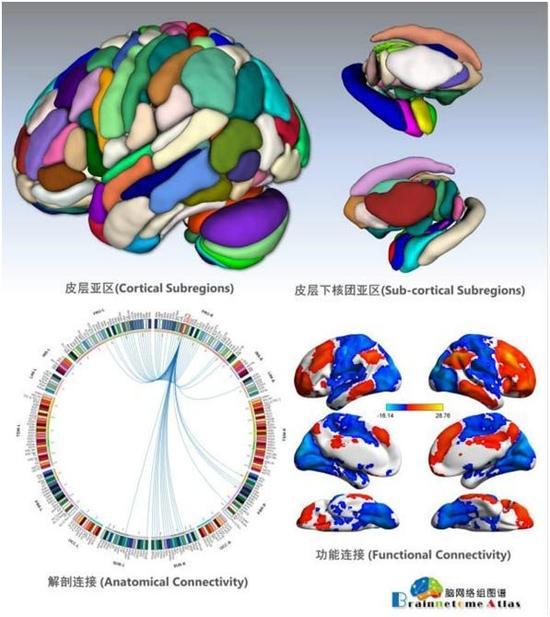 治疗脑部疾病更精准 中国专家绘全新人类脑图谱