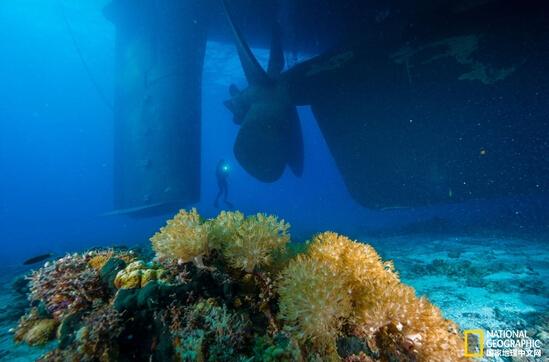 大型货轮海洋保护区搁浅 破坏大片珊瑚礁