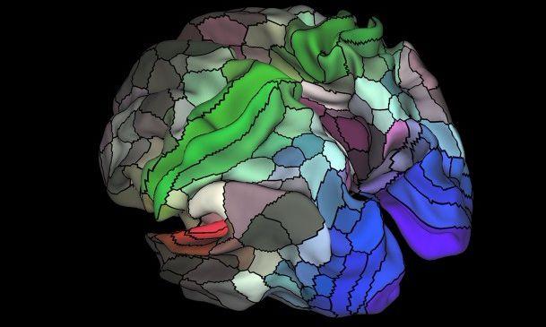 脑神经科学家绘制出迄今为止最详细的大脑区域地图