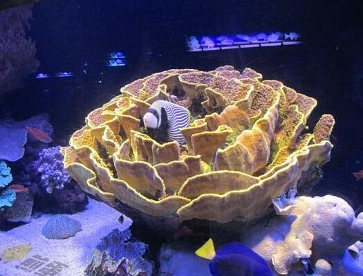 珊瑚礁生存之谜揭晓:竟是以鱼尿为食