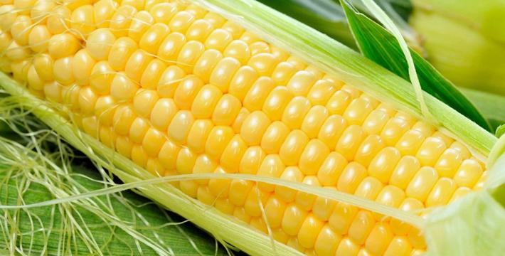 玉米现货报价有所企稳 难改低位整理格局