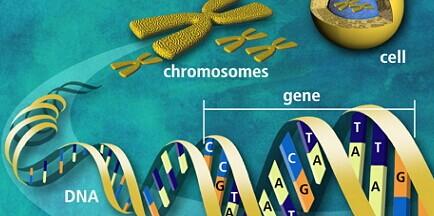 基因开关是什么 基因开关有什么用