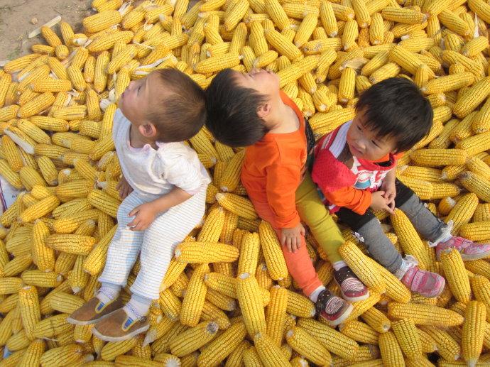 天气干燥收割加快 CBOT玉米期货26日收跌