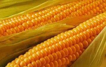 玉米期货品种概况