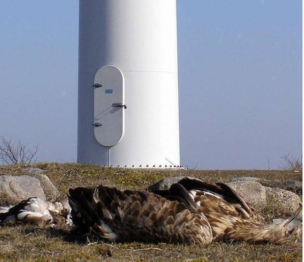 网站分分彩可靠么,风能产生的气旋影响鸟类方向判断