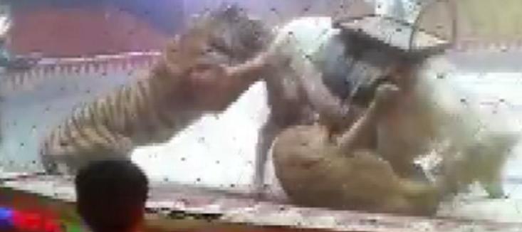 马戏团排练出意外 狮子老虎围攻马