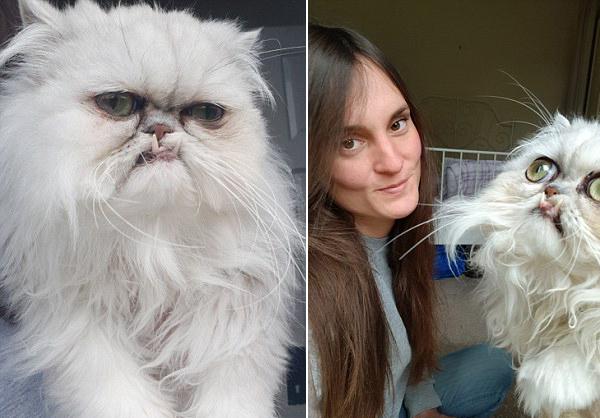 英国一猫咪天生愤怒脸 就像心情不好的人在生气