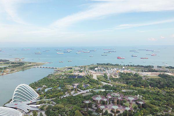 """新加坡树办身份证 被誉为亚洲最大的""""树地图"""""""