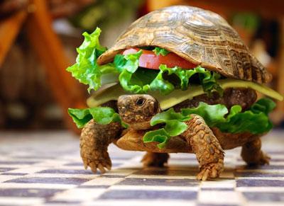 北京男子将乌龟塞进汉堡 卖的一手好萌