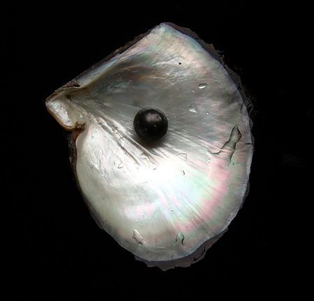 黑珍珠介绍