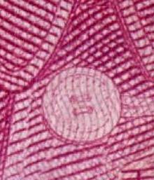 05版与99版100元人民币如何辨别?