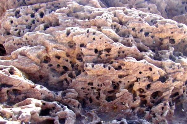 珊瑚化石图片