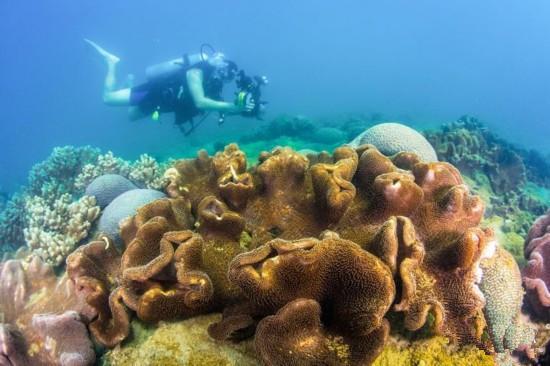国内首部海底微电影 珊瑚的曼妙身姿