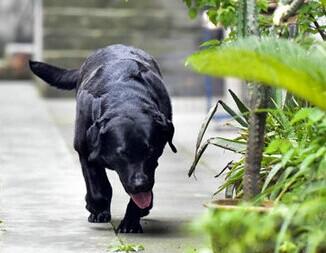 小狗专注拿耗子5年 一只认为自己是猫的狗狗