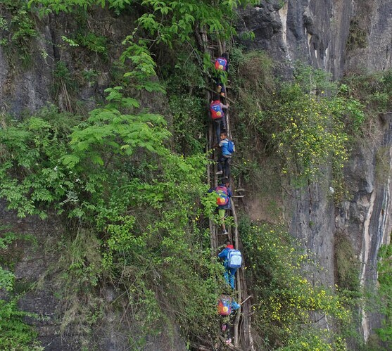 众生相:悬崖上的孩子爬藤梯上学