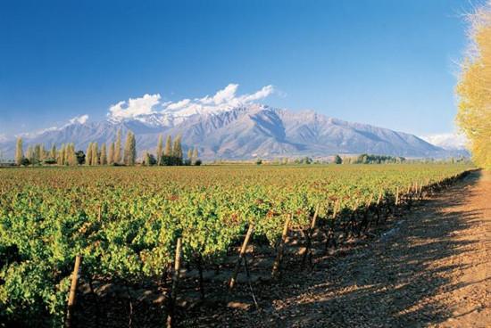 盘点智利10个最值得去的酒庄 干露酒庄居首