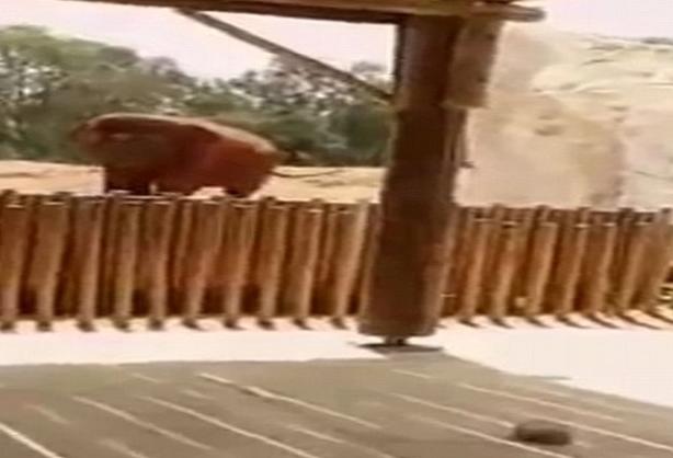 一起涉及大象的悲剧 7岁女孩不幸被大象投掷的石头砸死