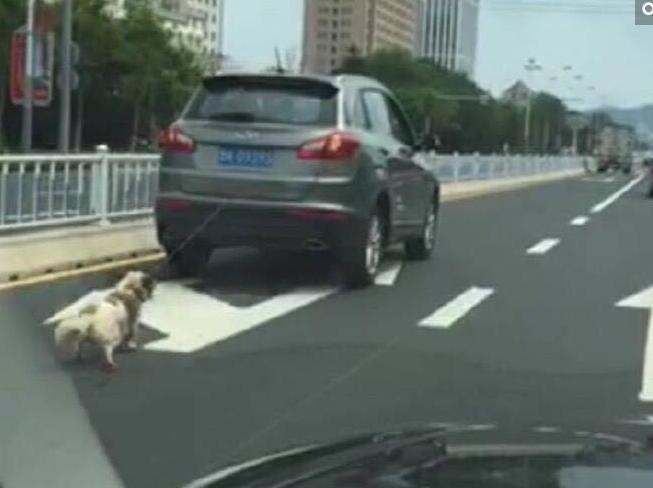 网曝男子开车将小狗拴后方拖行致死 路人愤怒围攻