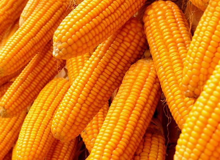 玉米期货投资