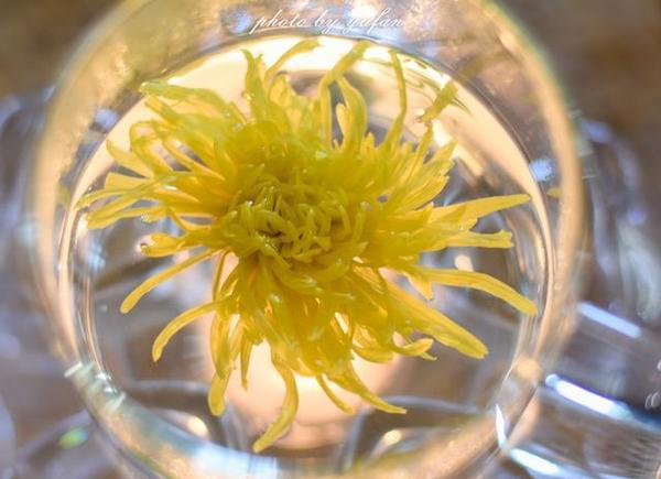 开封菊花茶,菊文化与茶文化的浪漫结晶