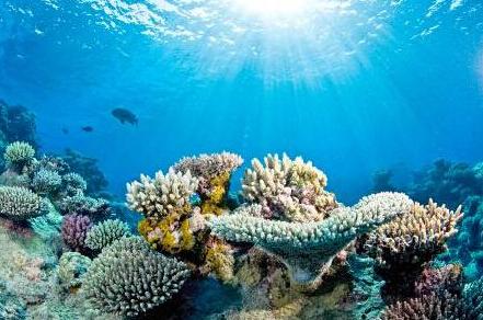 """珊瑚终将灭绝?全球气候变暖海水变酸都是""""致命""""原因"""