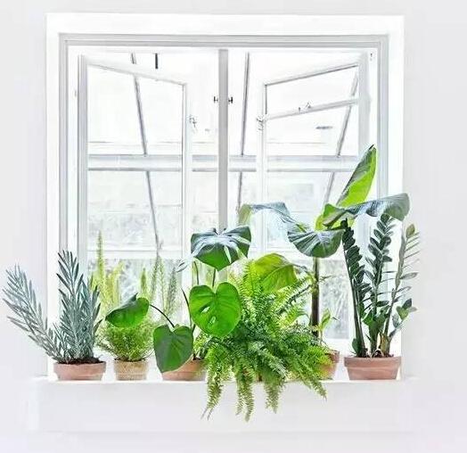 雾霾天植物净化室内空气哪个最佳