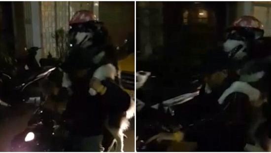 狗狗戴头盔与主人一起骑摩托