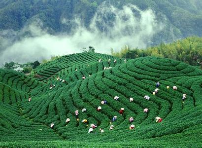 2016昆山口岸进口台湾茶叶增长209%