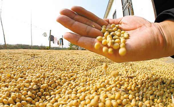 分析师平均预计2016/17年度美国大豆单产52.7蒲式耳/英亩