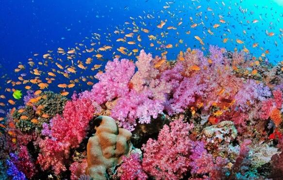 """日本珊瑚礁死亡事件接连发生 海水升温将珊瑚""""煮死"""""""