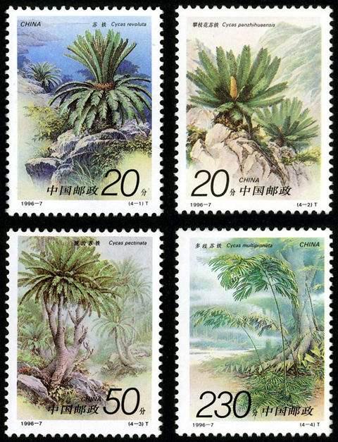 什么是苏铁?看完《苏铁》特种邮票你就知道了!