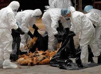 H7N9致79死 h7n9禽流感最新消息2017 h7n9禽流感症状