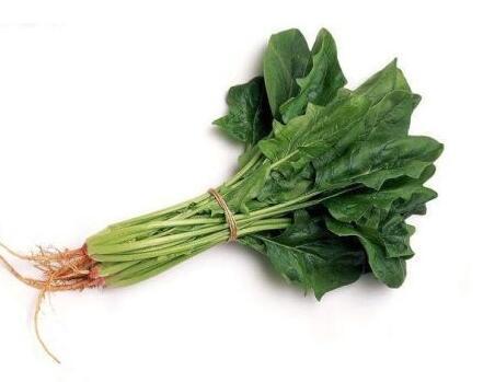 吃菠菜真能有力气吗?菠菜的价值有哪些?