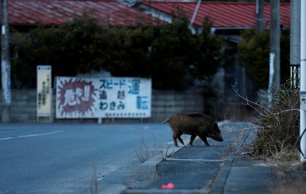 日本福岛核事故区禁令将解