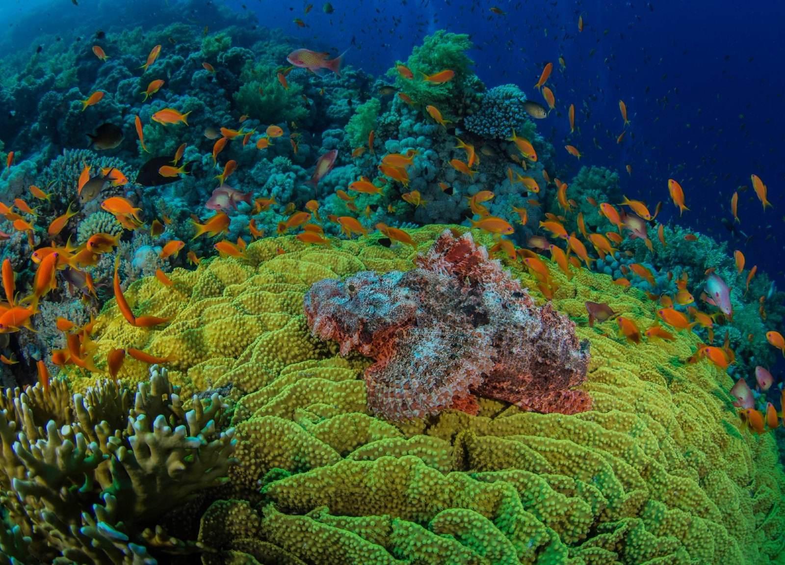 极端高温造成大堡礁大规模白化 需遏制未来气候变暖