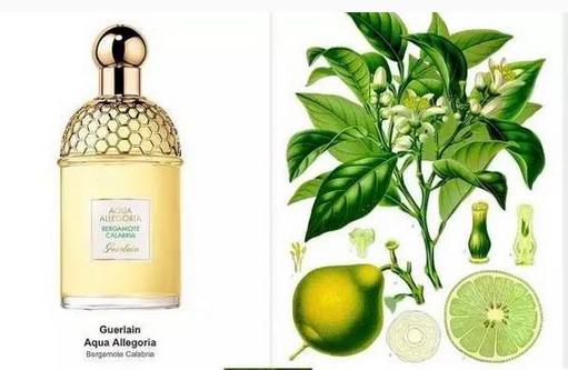 Guerlain娇兰推出Aqua Allegoria系列新香水
