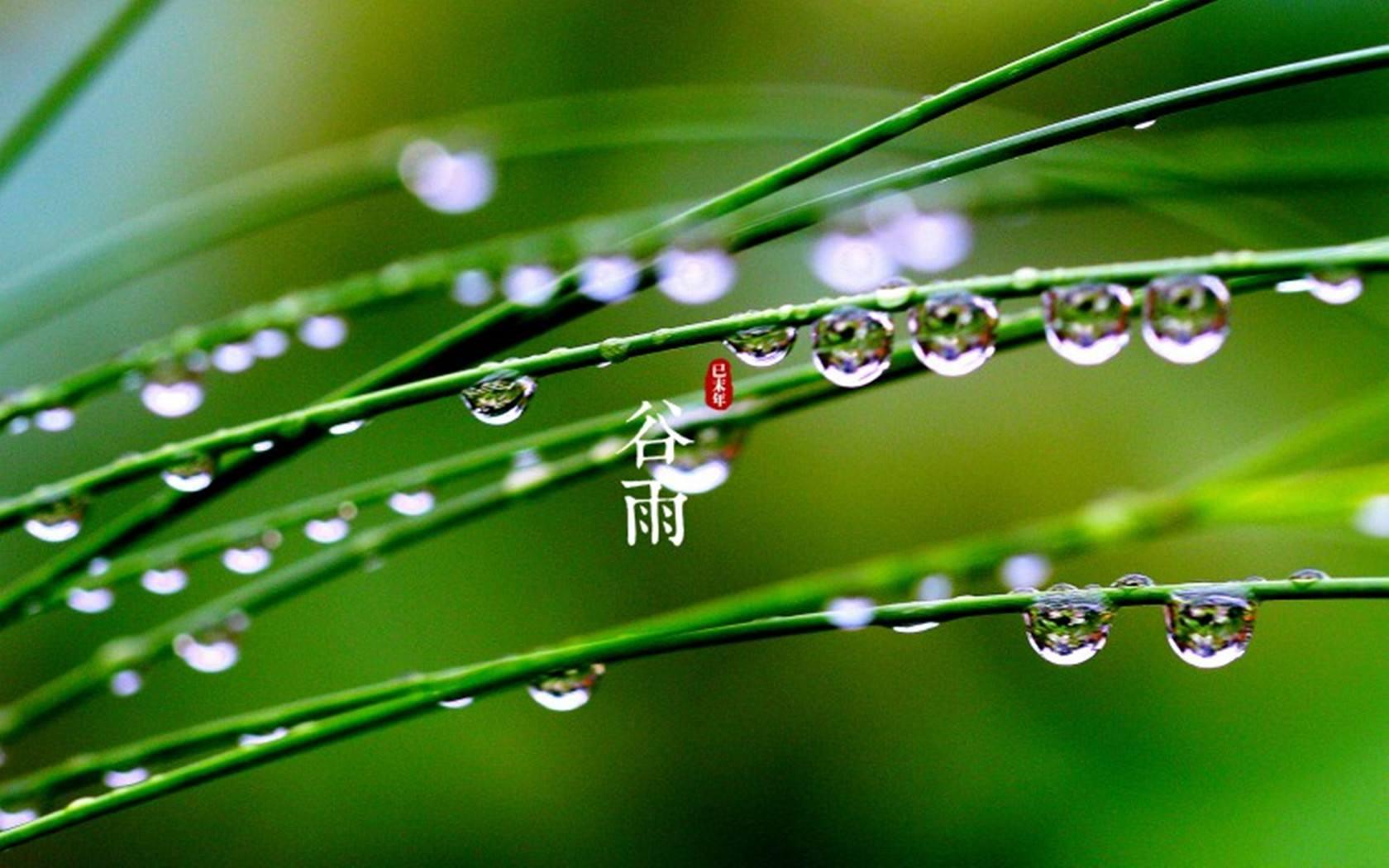 谷雨节气吃什么养生?这段时间应该注意什么?