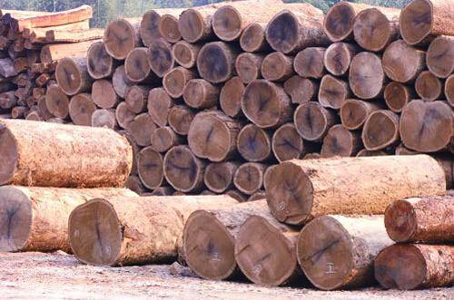2017年5月1日缅甸将停止木材和木制品出口