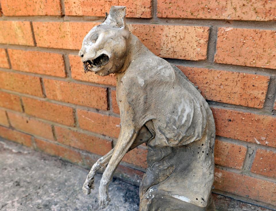 英国男子发现木乃伊猫 不少人称自己被吓哭