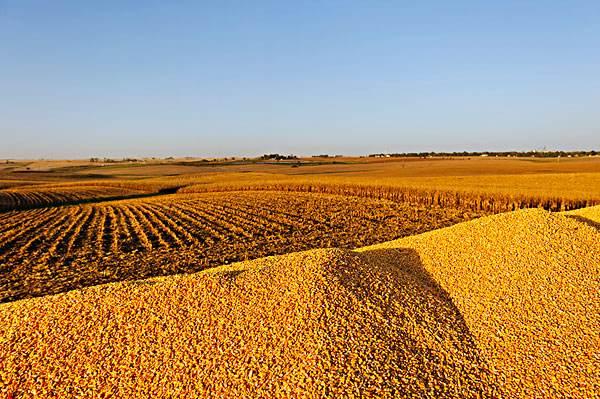 5月17日CBOT玉米期货收涨 美国玉米现货价格上涨