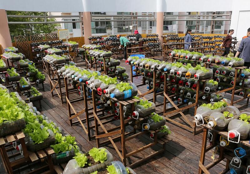 """""""瓶子菜园""""环保变废为宝 学会了你家新鲜蔬菜不间断"""
