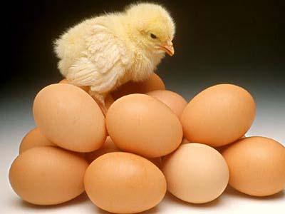 鸡蛋价格2元多一斤创十年新低 蛋价行情短期内难有起色
